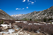 Lamoille Canyon In July Print by Sheri Van Wert