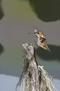Landing Hummer- Abstract Print by Tim Grams