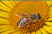 Macro Flower Framed Prints - Landing Pad Framed Print by Dan Holm