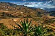Crops Photos - Landscape Guaitarilla region. Department of Narino. Republic of Colombia. by Eric Bauer