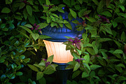Night Lamp Photo Posters - Landscape Lighting Poster by Tom Mc Nemar