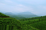 Mountains Posters - Landscape Through Tea Estates Poster by Photograph by Anindya Sankar Dey