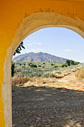 Archway Prints - Landscape with agave cactus field in Mexico Print by Elena Elisseeva
