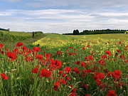 Photon Trappist - Landscape with Poppies