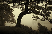 Silhouetted Posters - Landscape With Tree and Fog Poster by Dave Gordon