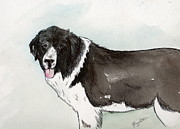 Landseer Paintings - Landseer Newfoundland by Nancy Patterson