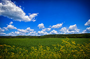 Puffy Prints - Lanesboro Fields Print by Bill Tiepelman
