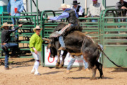 Bull Riders Photos - Language between rider and clown by Cheryl Poland