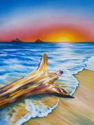 Art Medium Paintings - Lanikai Driftwood by Barbara Eberhart - Printscapes