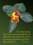 Bible. Biblical Posters - Lantan Flower and Psalms Poster by Linda Phelps