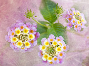 Confetti Prints - Lantana Camara Confetti Print by Betty LaRue