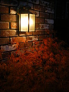 Lantern Light Maple Print by Linda Battles