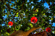 Backlit Prints - Lanterns at Tlaquepaque in Sedona Arizona Print by David Patterson
