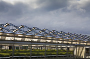Roofline Prints - Large Greenhouse Print by Paul Edmondson