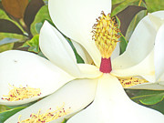 Large Magnolia In Color Print by Barbara Anna Knauf