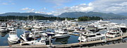 Businesses Prints - Large marina in Vancouver BC Canada. Print by Gino Rigucci