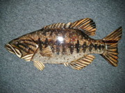 Largemouth Bass Reliefs - Large Mouth Bass number seven by Lisa Ruggiero