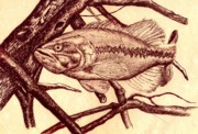 Bass Drawings Prints - Large Mouth Print by Kathleen Kelly Thompson