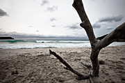 Large Piece Of Driftwood On A Beach On An Overcast Day Print by Anya Brewley schultheiss