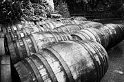 Distillery Prints - Large Whisky Barrels At The Famous Grouse Glenturret Distillery Scotland Uk Print by Joe Fox