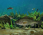 Fly Fisherman Paintings - Largemouth Bass by Ralph Martens