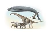 Largest Animals Size Comparison Print by Jose Antonio PeÑas