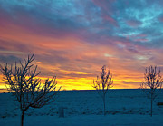 Larimer County Winter Sunrise Print by Harry Strharsky