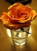 Peach Rose Photos - Las Vegas Rose by Tamara Stoneburner