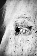 Kentucky Horse Park Photo Prints - Lashes Print by Darren Fisher