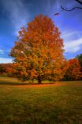 Fall Season Originals - Last Call Of Fall by John Absher
