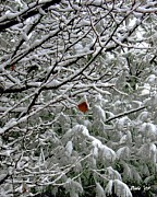 Snow On Branches Prints - Last Leaf Print by Dale   Ford