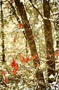 Last Leaves Clinging Print by Bonnie Bruno