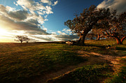 Australian Landscape Prints - Last Light Print by Heather Thorning