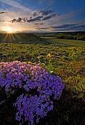 Wildflowers Photos - Last Light of Spring by Mike  Dawson