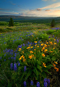 Balsamroot Framed Prints - Last Light over the Wenas Framed Print by Mike  Dawson