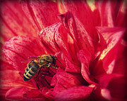 Flower Photographs Prints - Last of the Summer Nectar Print by Tam Graff