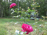 Stella Sherman - Last Roses of the Summer for Mother