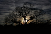 Eve Photo Originals - Last SunSet Of 2010 by Vincent Case