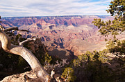 Late Afternoon At The South Rim Print by Bob and Nancy Kendrick