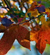 Colorful Leaves Prints - Late Autumn Colors Print by Stephen Anderson