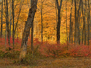 Landsape Photos - Late Day Autumn Light by Stephen  Vecchiotti