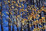 Yellow Leaf Photos - Late fall by Elena Elisseeva