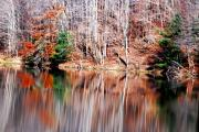 Fall Scenes Metal Prints - Late Fall Metal Print by Emily Stauring