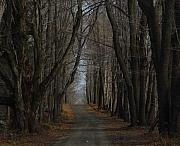 Cummington Photos - Late Fall Lane by Rosemary Wessel
