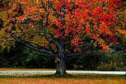 Fall Photographs Digital Art Posters - Late in Autumn Poster by William Carroll