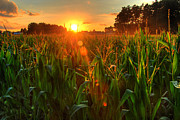 Summer Scene Posters - Late Summer Sunset Over The Harvest Poster by Richard Fairless