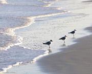 Sea Birds Paintings - Laughing Gulls Three by Constance Woods