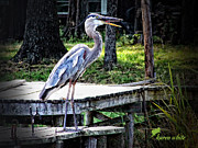 Karen White - Laughing Heron