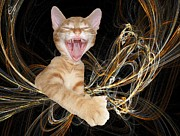 Print Digital Art Originals - Laughing Rascal by Zsuzsa Balla