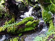 Moss Green Digital Art Prints - Laughing Waters Print by JoAnn SkyWatcher